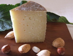Manchego, ewe milk cheese available to sell