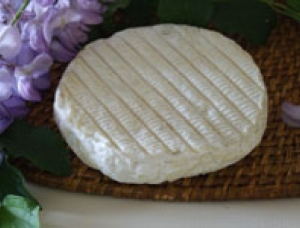 Saint Antonin - Organic cheese, ewe milk cheese available to sell