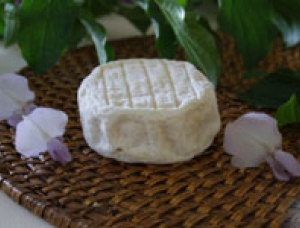 Cabecou, goat milk cheese available to sell