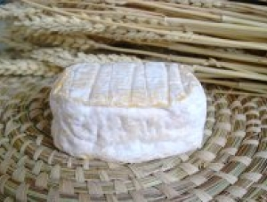 Machecoulais, cow milk cheese available to sell