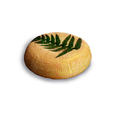Filetta Corsica , ewe milk cheese available to sell